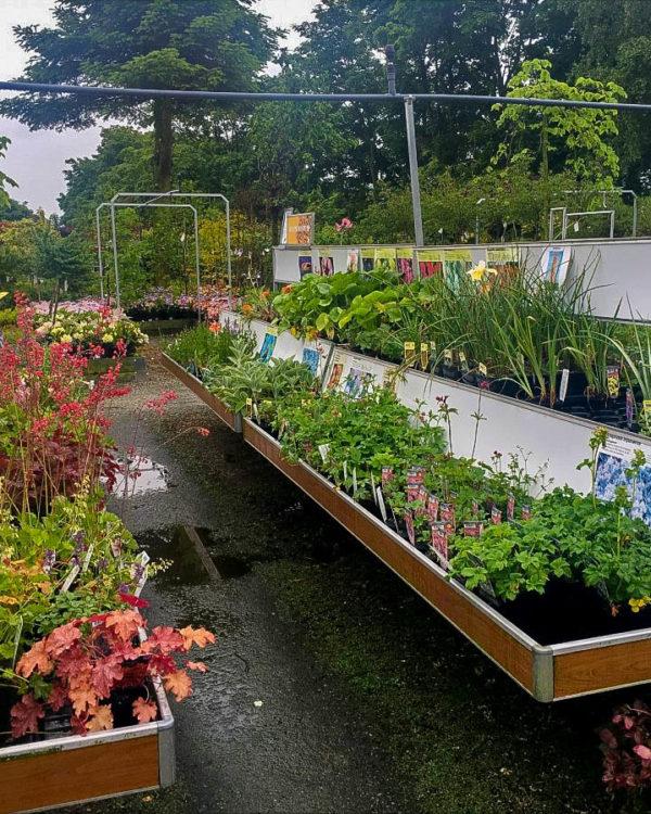 Horpestad Plantesalg * Uteplanter - Stauder > Utvalget