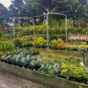 Horpestad Plantesalg * Uteplanter - Vintergrønne > Utvalget
