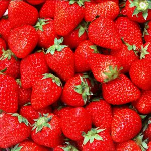 "Horpestad Plantesalg * Fragaria ""Polka"" Jordbær"