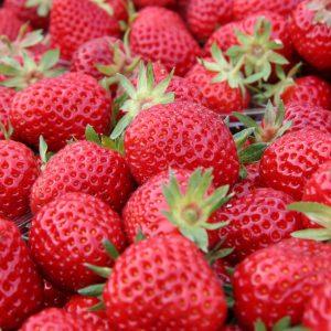 "Horpestad Plantesalg * Fragaria ""Senga Sengana"" Jordbær"