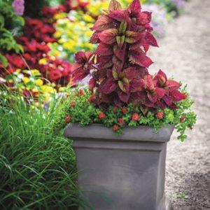 Horpestad Plantesalg * Crescent Garden Model Dorchester - Lettvekts krukk