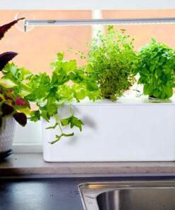 Horpestad Plantesalg * Hydroponisk dyrkingskasse Harvy 3 med LED - Persille og andre planter på kjøkkenet